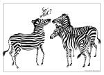 Zebra design on greeting card